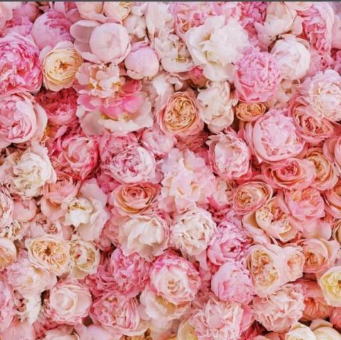 цветочная фотостена пудрово-розовая аренда