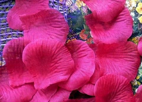 лепестки роз фуксия, лиловый