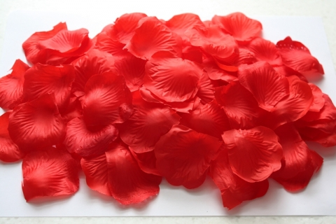 лепестки роз красные