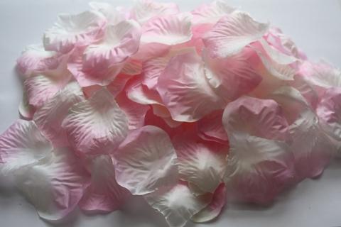 бело-розовые лепестки роз