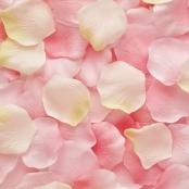 лепестки роз розово-кремовые фото