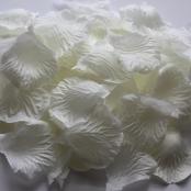 белые лепестки роз