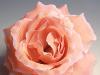 украшение на ручки бордовые розы